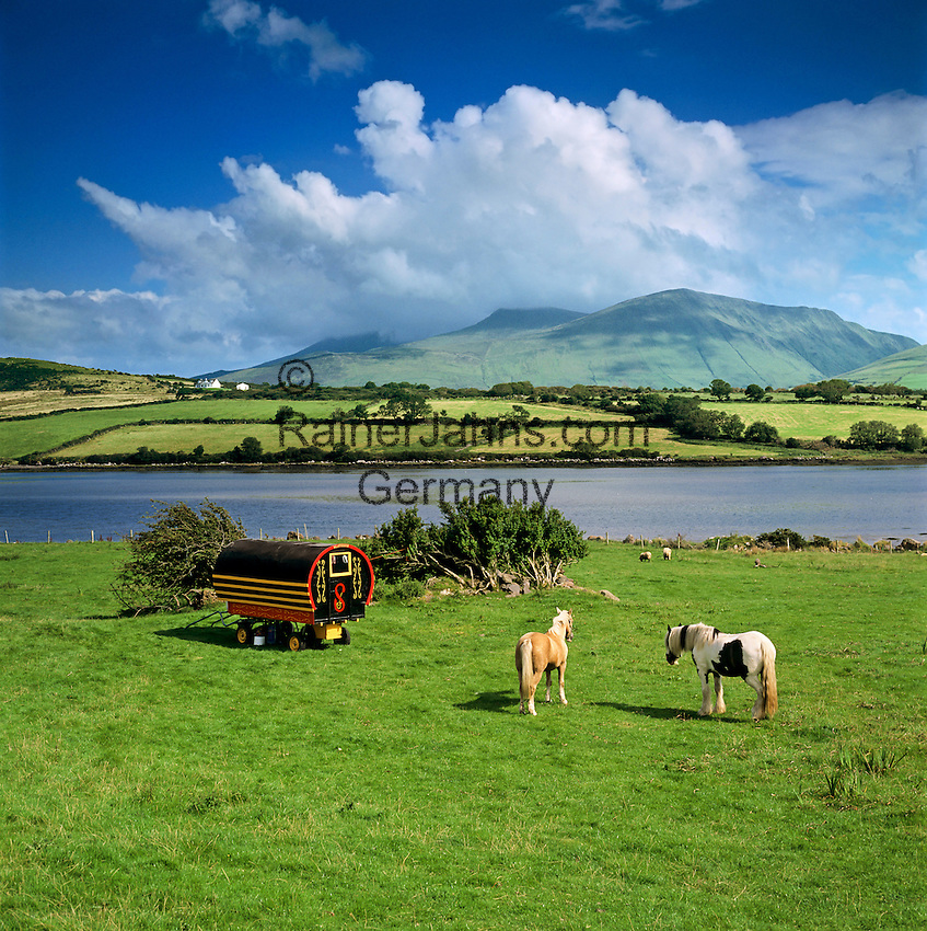 Ireland, County Kerry, The Dingle Peninsula, near Cloghane: Gypsy caravan and horses with Brandon Bay and Beenoskee Mountain in distance | Irland, County Kerry, The Dingle Peninsula, bei Cloghane: Planwagen und Pferde auf einer Koppel, dahinter die Brandon Bay und Beenoskee Mountain