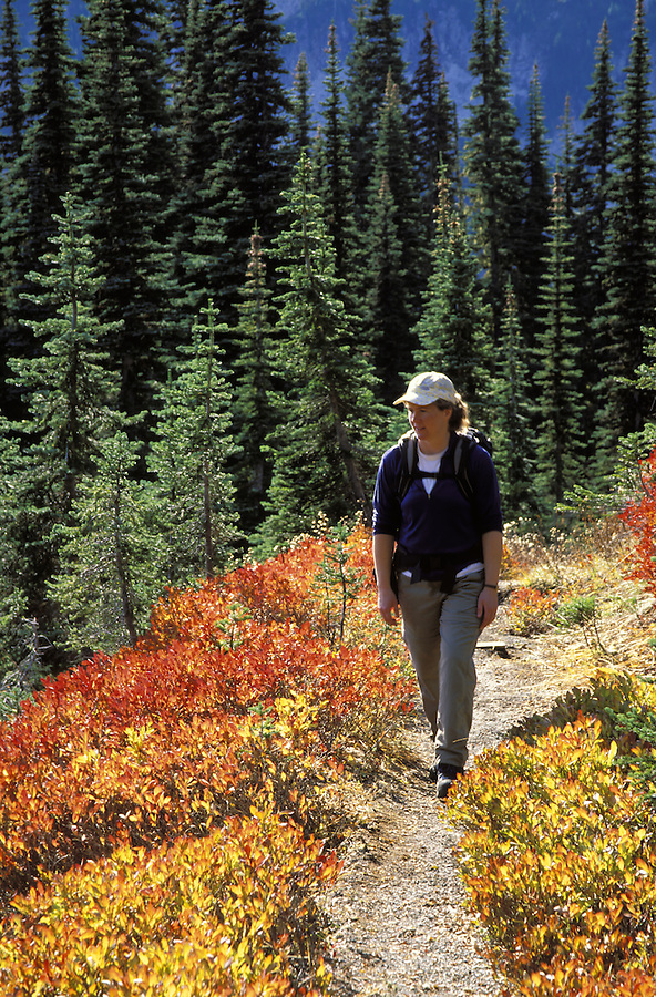 Woman hiking on trail through fall colored meadows, Mazama Ridge, Mount Rainier National Park, Lewis County, WA