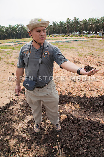 Dr Maketab Mohamed, head of the Johor branch of the Malaysian Nature Society, holding a handful of rich compost used on the plantation. The compost comes from the recycled waste of the palm oil mill. The Sindora Palm Oil Plantation, owned by Kulim, is green certified by the Roundtable on Sustainable Palm Oil (RSPO) for its environmental, economic, and socially sustainable practices. Johor Bahru, Malaysia