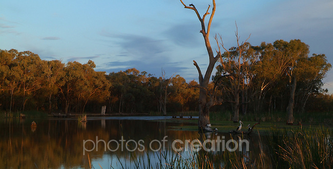 Dusk at the Kings Billabong - Mildura Vic