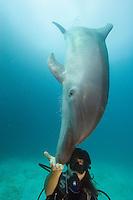 Diver (MR) and bottlenose dolphin, Tursiops truncatus, Palau, Micronesia.