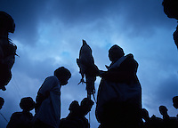 June 12th, 2004_ Salau, Timor-Leste_ Men gather in preparation for the evening round of cock fighting in the town of Salau.  Photograph by Daniel J. Groshong/Tayo Photo Group