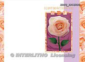 Alfredo, FLOWERS, photos, BRTOLP15280,#F# Blumen, flores