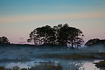 At sunrise, a flock of birds fly low in the mist over the waters of Chincoteague National Wildlife Refuge on Assateague Island, Virginia.