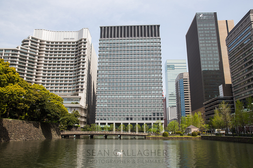A swan swims past highrise buildings in central Tokyo.