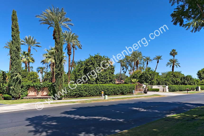 Palm tree lined road