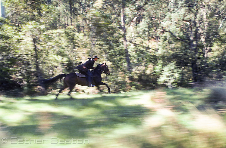 "Stockman known as ""Mountain Cattleman"" racing on horseback through forest in Snowy Mountains near Mt Buller, Victoria"