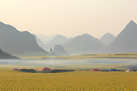 In February and March, the village of Jinji Lin (the Hills of the Golden Rooster) is certainly the most prized spot for the Chinese tourists come to see the panorama of rape fields stretching to the horizon. Beekeepers and vendors have set up camp for one and a half months along the road that leads to the hills that provide the best views.