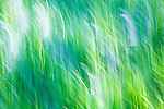 Abstract of green grasses