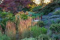 Calamagrostis x acutiflora 'Karl Foerster' (Feather Reed Grass) in afternoon light; Albers Vista Gardens, Seattle Washington