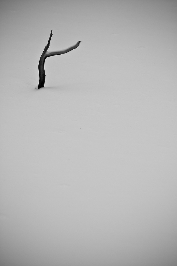 A forked branch pokes through the snow.