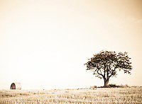 Hay Bale and Tree in Field - Antique effect