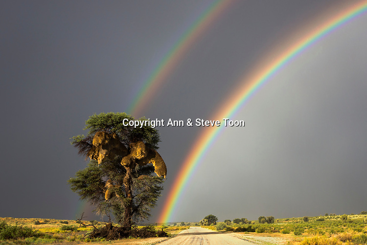 Rainbow over Kgalagadi transfrontier park, Northern Cape, South Africa, February 2017