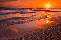 Shells on sandy beach on Lake Ontario and sunset<br />Sandbanks Provincial Park<br />Ontario<br />Canada