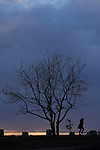 A woman walks past a tree on a a hilltop in Pacific Palisades, California October 28, 2013