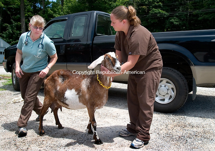 BETHANY, CT. 15  June 2010-061510SV12-Dr. Kimberly McClure and Stacy Bowers, CVT, look over a goat called &quot;Selebration&quot; during an exam at her office in Bethany Tuesday.<br /> Steven Valenti Republican-American