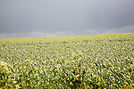 Grey sky summer farming landscape on the Marlborough Downs, near Beckhampton, Wiltshire, England