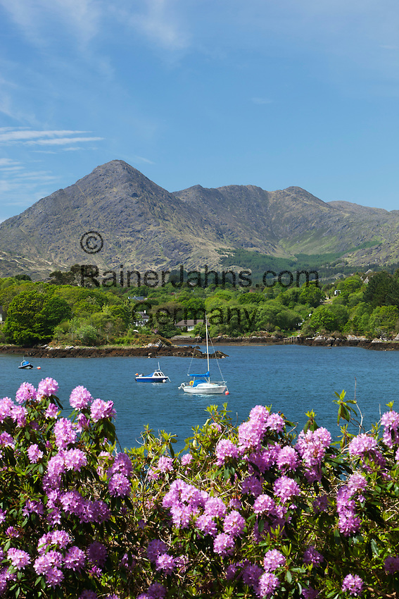Ireland, County Cork, Beara Peninsula, view from Ilnacullin or Garinish Island over Rhododendrons to Caha Mountains | Irland, County Cork, Beara Halbinsel, Insel Ilnacullin oder Garinish Island, bei Glengarriff: Blick ueber die Bucht zu den Caha mountains