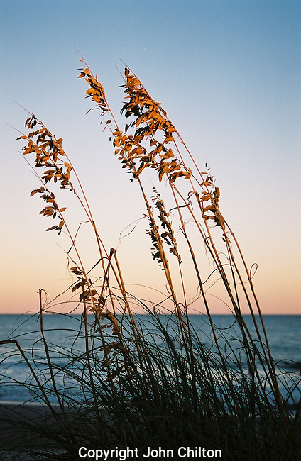 Photo of Sea Oats on the Beach