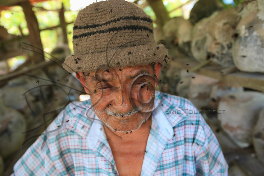 The face covered in stingless bees, the beekeeper only has to fear a few inconsequential bites