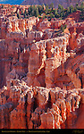 Bryce Canyon Hoodoos at Rainbow Point, Bryce Canyon National Park, Utah