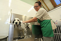 FAO JANET TOMLINSON, DAILY MAIL PICTURE DESK<br />Pictured: A dog is given a bath Monday 14 November 2016<br />Re: The Dog House in the village of Talog, Carmarthenshire, Wales, UK