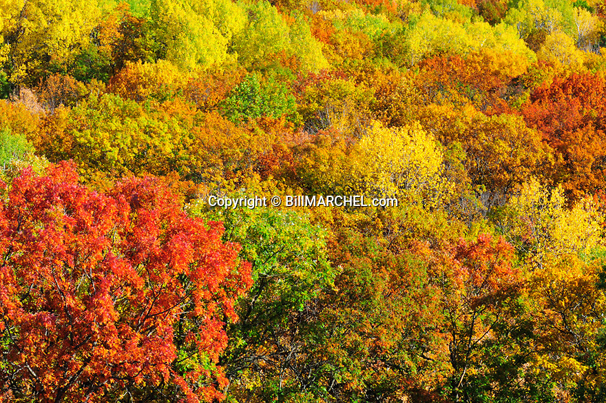 00440-010.09 Fall Color: Mix of mostly oak, aspen and birch are in peak of color.  Brilliant, colorful.
