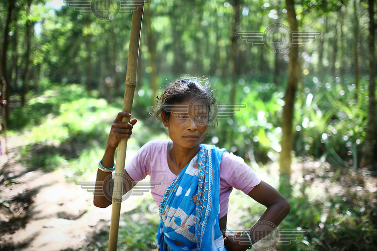A Garo woman in the Madhupur forest. The Garo (or Mandi, as they refer to themselves) are an ethnic minority thought to be of Tibeto-Burmese origin. Prior to British rule they were mostly anamists but missionary work led the majority to convert to Christianity. The Garo of the Madhupur forest have long been under the threat of eviction by the government and the forest that they gain much of their livelihood from is being rapidly destroyed by unregulated logging.