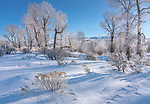 Grand Teton National Park, Wyoming:<br /> Morning light on hoar frosted cottonwoods trees and shrubs