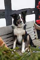 Molly, the dog, sits on a bench in the garden