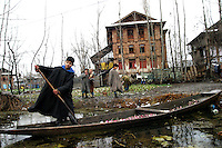 A Kashmiri muslim boy cleans his shikara filled with turnips which will be later sold in the market as his friends watch him from a distance in Dal Lake, Srinagar, the summer capital of Jammu & Kashmir, India.