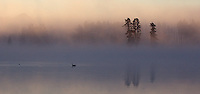 We enjoyed a foggy morning shoot on the Yellowstone River.