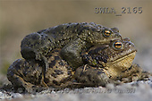 Carl, ANIMALS, wildlife, photos(SWLA2165,#A#)