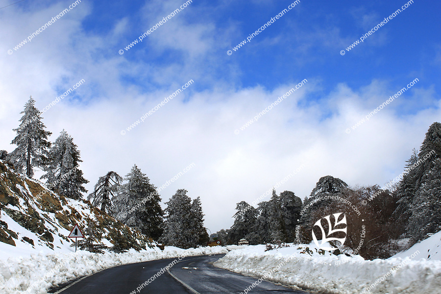 Gorgeous snowy road leading to Troodos mountains in Cyprus.
