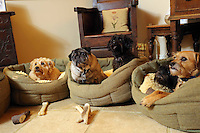 FAO JANET TOMLINSON, DAILY MAIL PICTURE DESK<br />