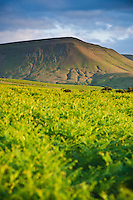 View of Twmpa - Lord Hereford's Knob over common lands below Hay Bluff, Black Mountains, Brecon Beacons national park, Wales