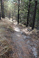 The Dust to Glory singletrack trail at Echo Ridge was constructed during the spring and summer of 2014. It connects the Far East trail to North Junction at the northern end of the Echo Ridge trail system.