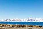 Walrus haul out at Poolepynten, Prins Karls Forland, Svalbard, Norway, Europe