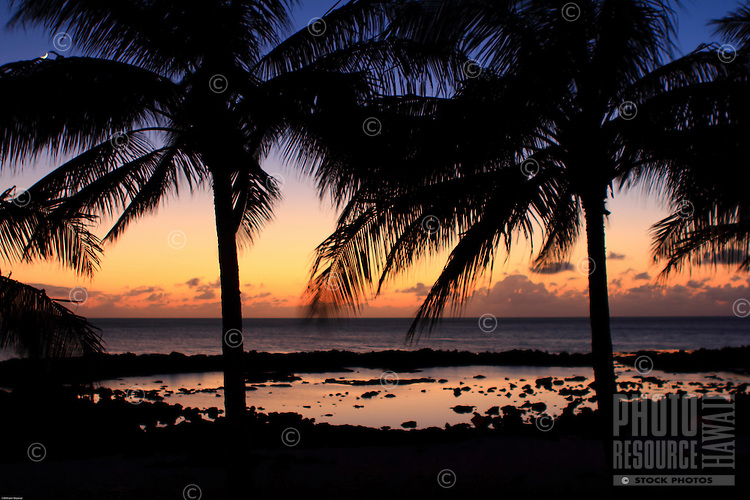 Coconut trees after sunset at Shark's Cove, O'ahu