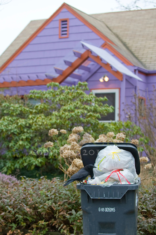 Purple House with Orange Trim