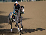 June 7, 2019 : Tacitus gallops on the main track as horses prepare for the Belmont Stakes on Belmont Stakes Festival Weekend at Belmont Park in Elmont, New York. John Voorhees/Eclipse Sportswire/CSM