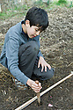 Boy planting garlic cloves