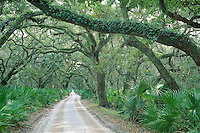"""This barrier island, inhabited by humans for thousands of years, and most recently by the Carnegie family, is now a National Seashore. This sandy track stretches the length of the island, and is refered to as """"Main Street""""."""
