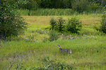 A deer at the Kootenai National Wildlife Refuge