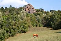 Pozzallo frazione di Romagnese (Pavia). Cooperativa Agricola Canedo: allevamento semibrado di bovini da carne. Toro --- Pozzallo Romagnese (Pavia). Canedo Agricultural Cooperative: semi-wild breeding of beef cattle. Bull