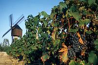 Europe/France/Pays de la Loire/Maine-et-Loire/Turquant : AOC Saumur-Champigny - Le vignoble et le moulin de l'Herpinière