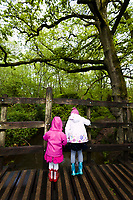 Visitors playing pooh sticks at Pooh Bridge in Ashdown Forest, Sussex, UK, May 19, 2017. Picturesque Ashdown Forest stretches across the countries of Surrey, Sussex and Kent, and is the largest open access space in the South East of England. It is famous as the geographical inspiration for the Winnie the Pooh stories and is popular with fans of the characters.