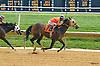 Cherokee Road winning at Delaware Park on 9/3/16