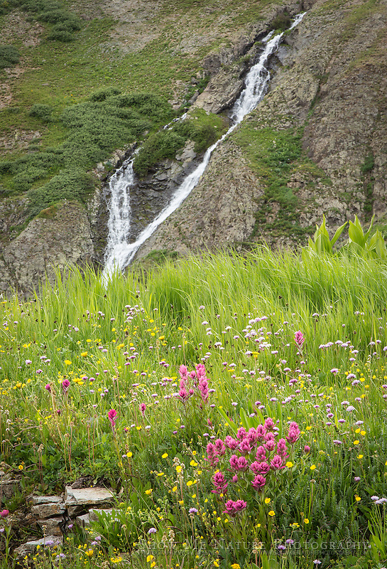 Mountain Meadow filled with wildflowers and a stream