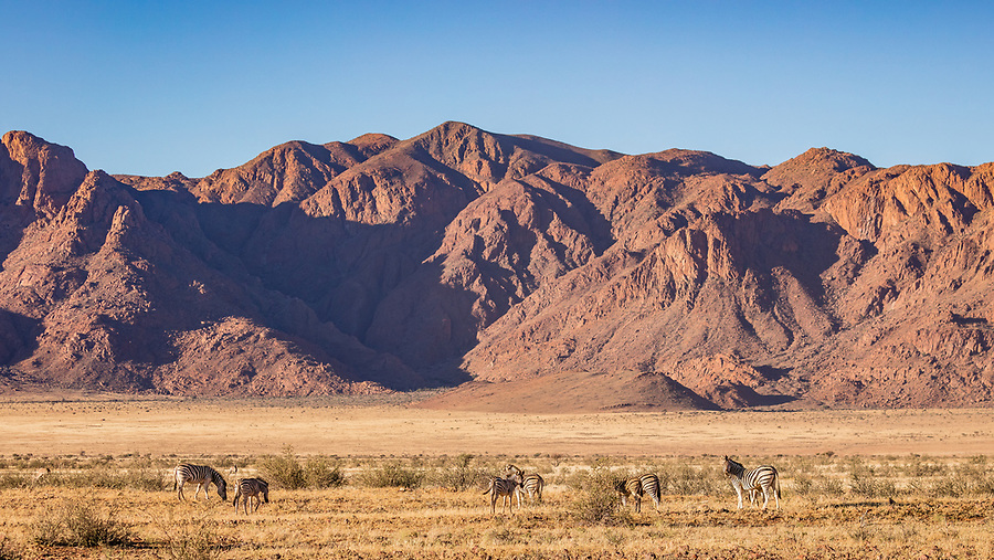 Zebra Dwarfed By The Scenery On The Road To Sossusvlei.
